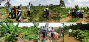 Figure 4: Progressive crop growth in Hogojo from February 2015 to December 2015